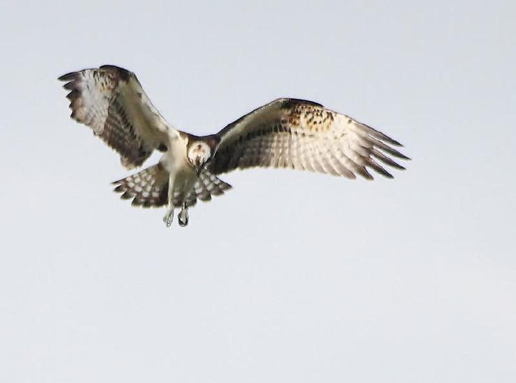 Vogels gespot in Wijnaerden